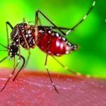 El Virus del Zika, prevenlo