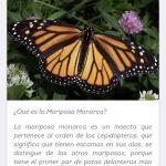 Lanza Instituto de Ecología MonarcaMx