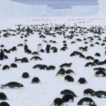 """""""Por hambre"""" mueren miles de crías de pingüinos en la Antartida"""
