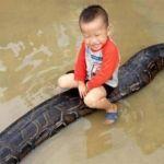 Niño de tres años juega encima de una enorme pitón