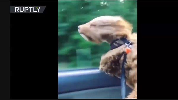 """Photo of Perro """"Chewbacca"""" desafía el viento… ¡qué la fuerza te acompañe!"""