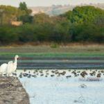Invita Instituto de Ecología al avistamiento de aves en ANP Presa de Silva