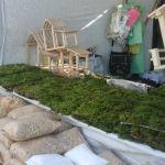 Venta de hierbas y accesorios para nacimiento oscilan los 225 pesos