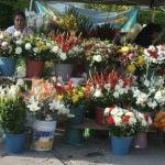 """Vendedores de flores """"hacen su agosto"""" en Día de Muertos"""
