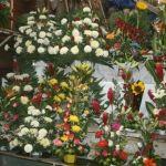 Rosa blanca, las  más cara y cotizada en diciembre en Irapuato