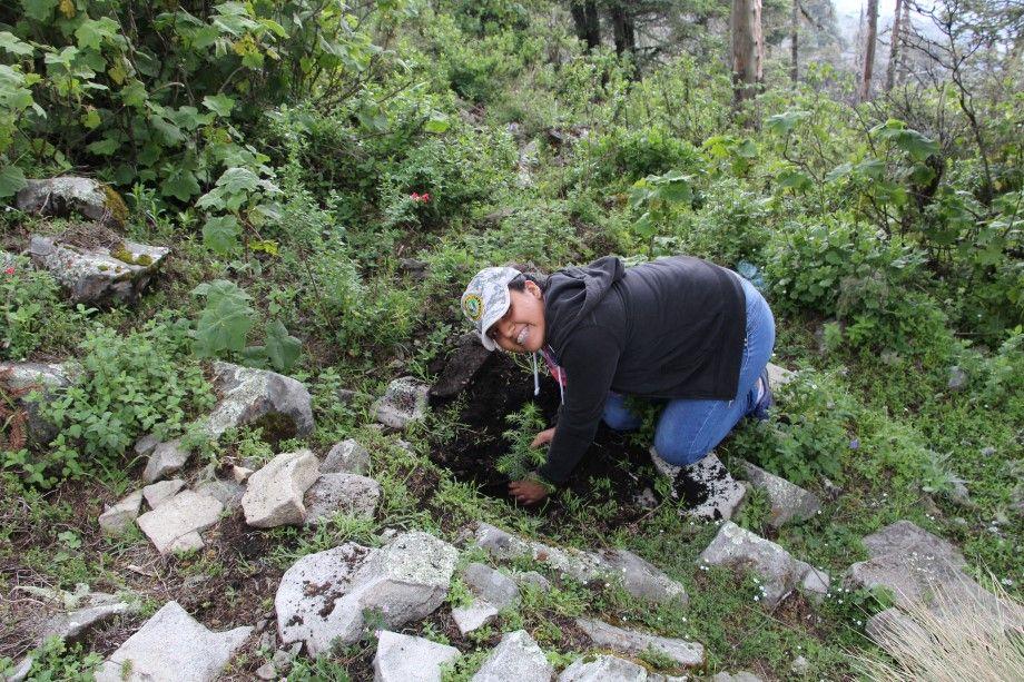Photo of Imparte Conafor Capacitación Técnica en Protección y Restauración sobre Áreas Forestales y Urbanas de Guanajuato