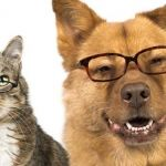 Confirmado: Los perros son más inteligentes que los gatos debido al número de neuronas