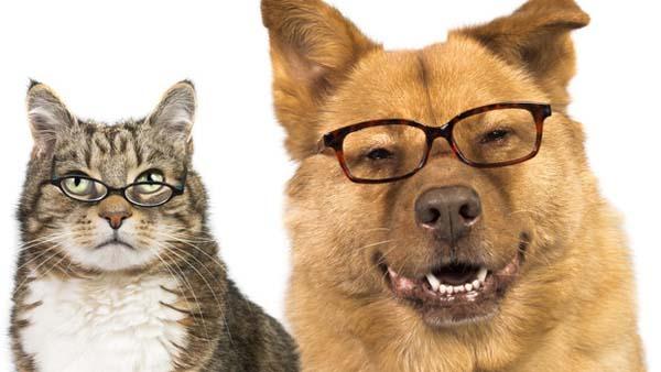 perros-inteligentes.jpg