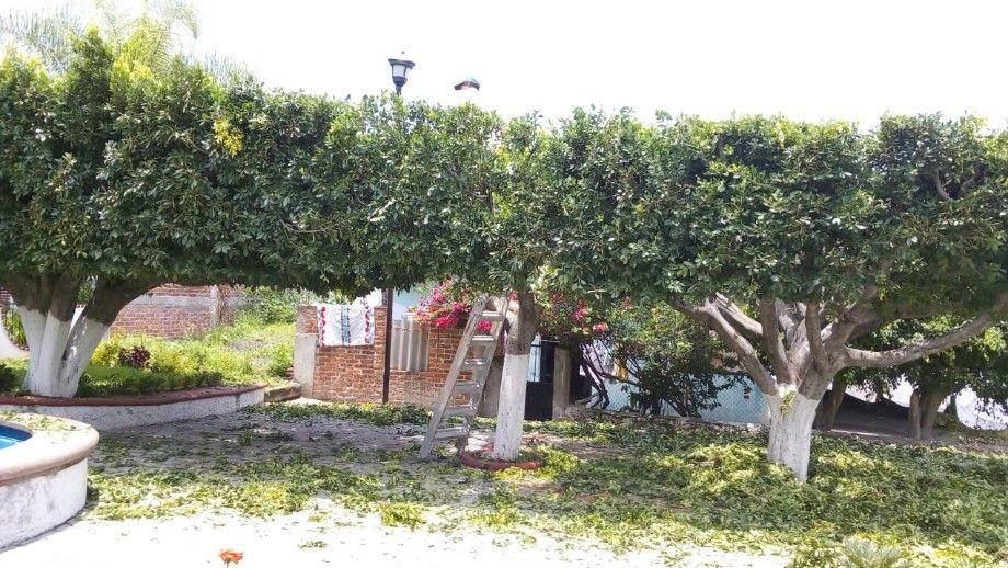 Photo of Poda ligera de árboles en comunidades de Huanímaro