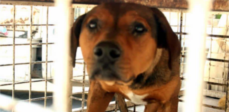 """Photo of Si a tu perro se lo lleva la """"perrera""""… tendrás poco tiempo para rescatarlo"""