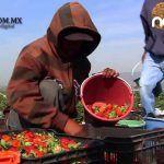 Irapuato primer lugar nacional en exportación de agroalimentos