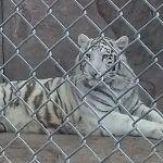 Realiza Zoo Ira intercambio de animales con Zoo León