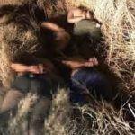 Tiran cinco cadáveres a orilla de la autopista