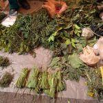 Para dolores y enfermedades, remedios con hierbas caseras