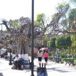 Están muriendo árboles de Jardín principal de Huanímaro
