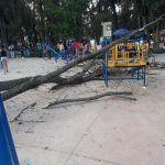 Cae rama de árbol a niños en Irekua; un lesionado, reportan