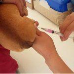 SSG se sumará a la 1. ra Semana Nacional de Vacunación Antirrábica Canina y felina