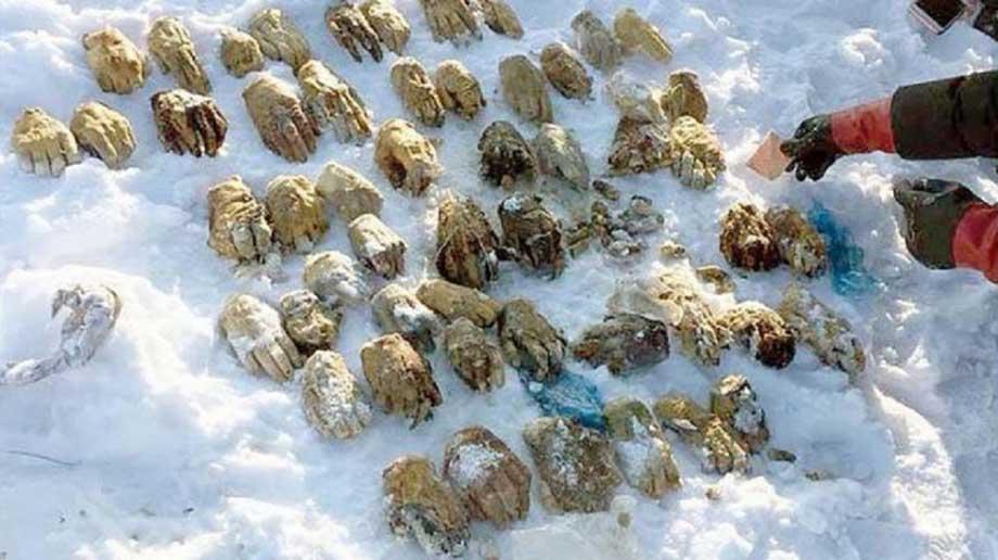 Photo of Macabro: encuentran 27 pares de manos en un río congelado