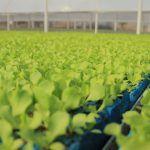 El Comercio Internacional, evoluciona la producción agrícola de Guanajuato