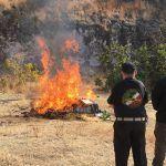 PGR Guanajuato incineró más de 83 kg de narcóticos y destruyó más de 80mil objetos falsificados