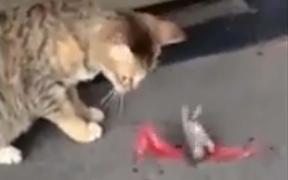 gato-y-raton.jpg