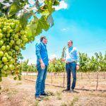 Buscaremos consolidar el sector vinícola guanajuatense: Erandi Bermúdez