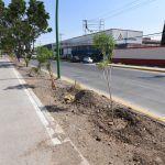 Plantan árboles en Solidaridad y 3er Cinturón Vial