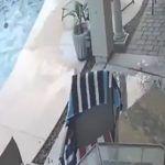 Perro salva a su amigo que se ahogaba en una alberca