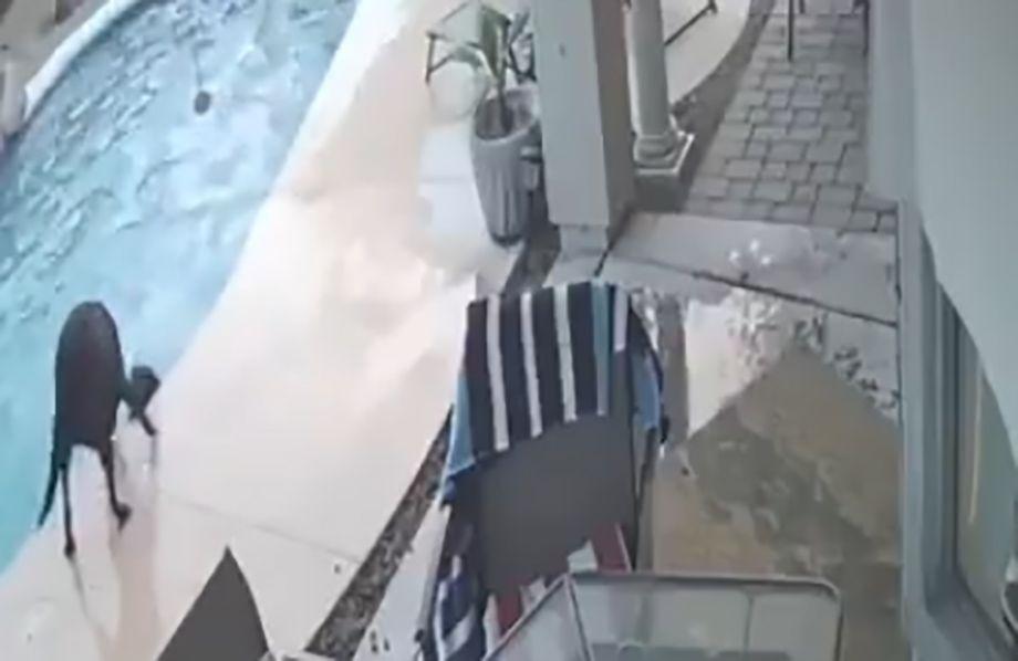Photo of Perro salva a su amigo que se ahogaba en una alberca