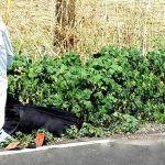 Localizan cuerpo sin vida en comunidad de Pénjamo