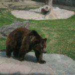 Más de 7 millones anuales cuesta mantener el  Zoo de Irapuato
