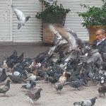 """El amigo de las palomas, """"Don Cha"""""""