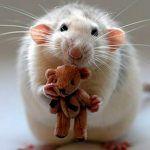 La gata que tuvo ratoncitos