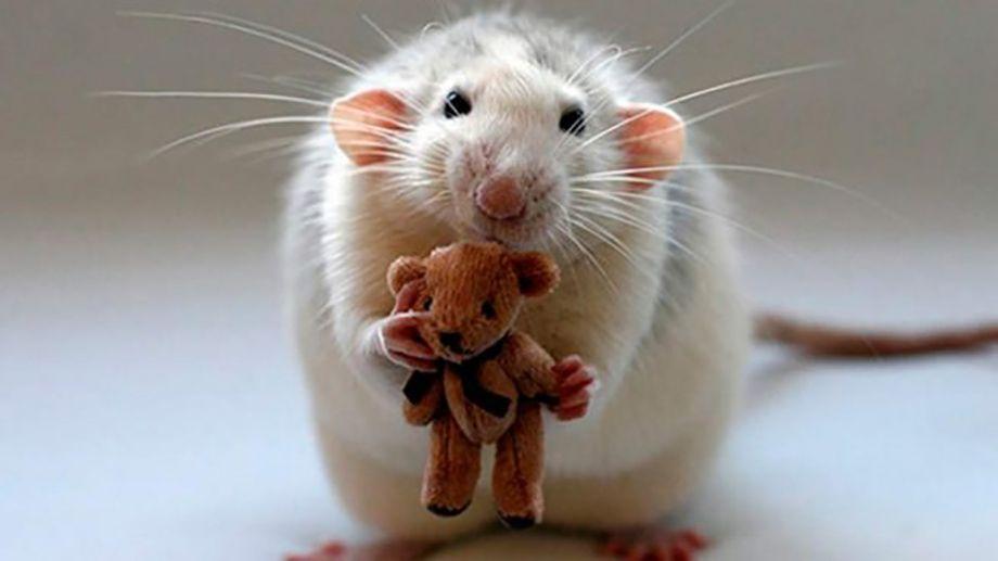 ratoncito.jpg