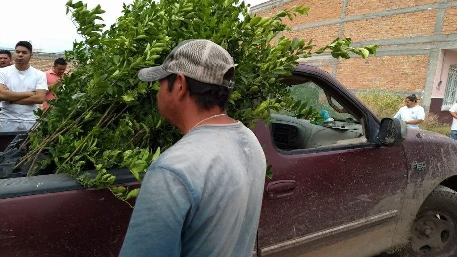 Photo of Entregan 3,582 plantas de limones para 11 beneficiarios