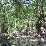 Ruta extrema de Manuel Doblado, destruye caminos: habitantes se quejan