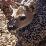 Invita Instituto de Ecología a conocer actividades del ANP Cuenca de la Esperanza