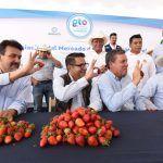 Mercado de la Fresa de Irapuato quedará concluido este mismo año