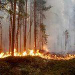 Olas de calor provocan incendios y muertes en los países más fríos del planeta