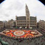 Uriangato florece en Bruselas