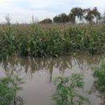 Apunto del desborde; Abasolo en alerta por alto nivel de ríos Lerma y Turbio