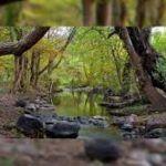 Las Musas: Un hermoso paraíso natural y una trágica muerte