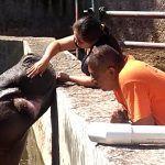 Carlos cuida a los animales del Zoo; más que miedo les tiene cariño