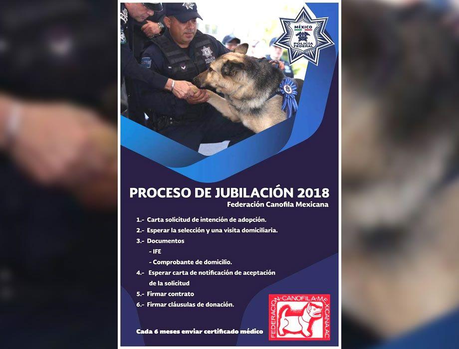 Photo of No a la eutanasia; PF lanza solicitud para adoptar perros policias