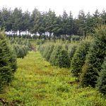 Arboles naturales ayudan en la economía de cultivadores del país