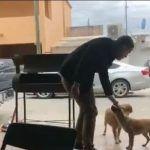 Hombre apuñala a un perro (Video)