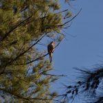 Conservarán aves en Parque Irekua