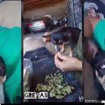 Circula video de perro drogado en internet