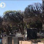 Varios factores fueron los causantes de la sequía de los árboles del jardín principal de Irapuato