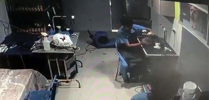 Perrito golpeado en veterinaria